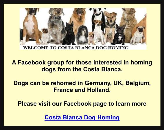 Costa Blanca Dog Homing,Germany,UK,Belgium,France,Holland